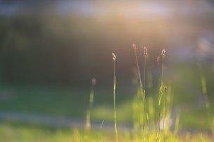 andyfitz_grass