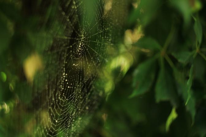 cobweb_by_sigi_sagi
