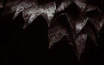 dark_ivy