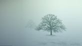 deep_winter_trees