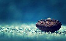 droplet-on-pebble