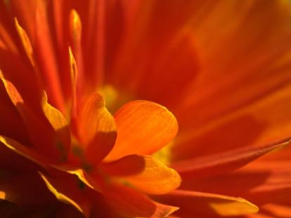 freshflower