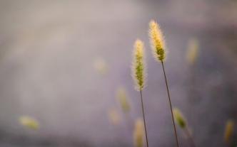 grass_heads