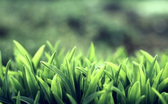 grass_macro_wallpaper