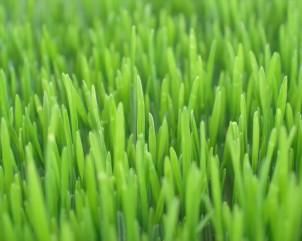 greenmeadow