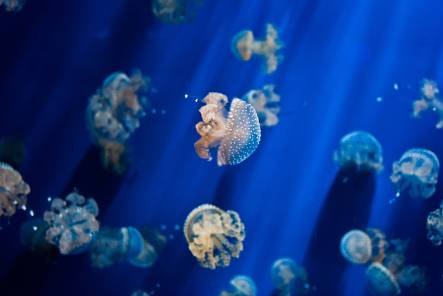 jelly_fish_by_radu_galan