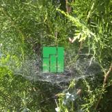 kristo_spiderweb