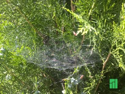 kristo_spiderweb2