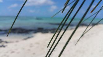 linuxmint_beach