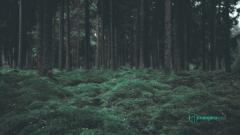 logicwavelength_wood