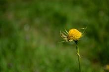 sezgin_flower