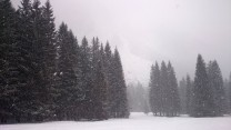 snowy_pines_above_planica_by_jan_makovecki