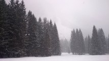 snowy_pines_above_planica_by_jan_makovecki