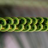 spirales_by_victor_mussard