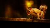 Paintography of a Squirrel by Ray Bilcliff - www.trueportraits.c