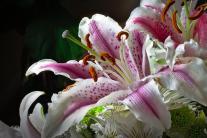 Bloom_by_Victor_Madru