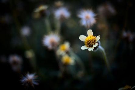 bfantinatti_flower
