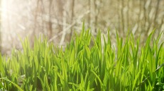 monika_pure_green_grass