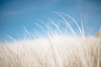 rsmith_single_blade_of_grass