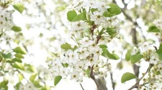 Spring_Flowers_by_MK4-MI01