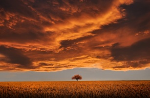 tree-736875