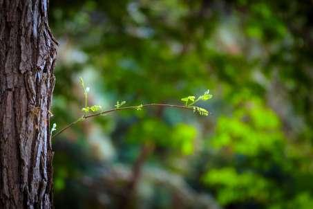 bfantinatti_small_leaves