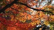 dking_autumn_in_japan