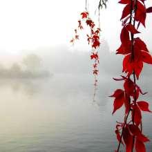 Serenity_Enchanted_by_sirpecangum