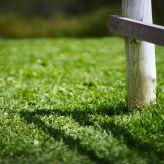 bfantinatti_grass